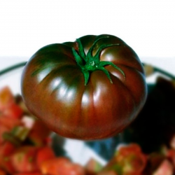 Tomate negro de Tula planta
