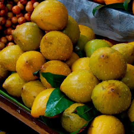 Canistel planta comprar tropical raro