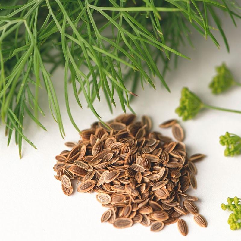Eneldo semillas