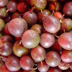 Maracuyá morada frutos con semillas