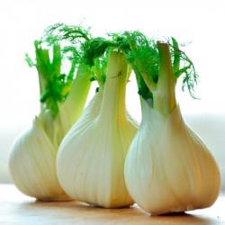 Hinojo comprar semillas online