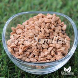 Acebo semillas ilex aquifolium