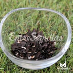 Agapanthus africanus semillas