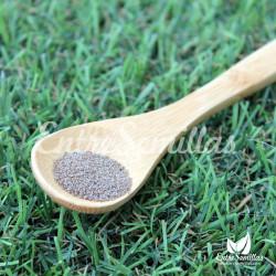 ajenjo dulce Artemisia annua semillas
