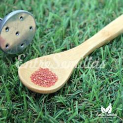 Amaranto semillas sembrar