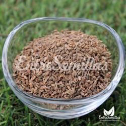 Anís dulce semillas Pimpinella anisum