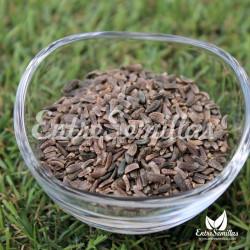 Bardana - Sobre 50 semillas