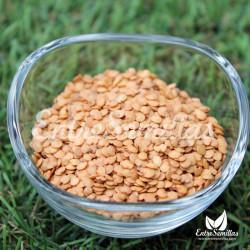 Berenjena semillas