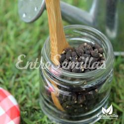 Borraja semillas Borago officinalis