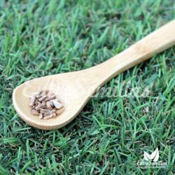 acorus calamus semillas calamo aromatico