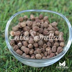Capuchina maceta semillas Tropaeolum minus