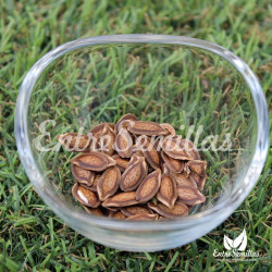 Sicana odorifera semillas cassabanana