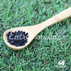 Cebolla Ailsa Craig semillas