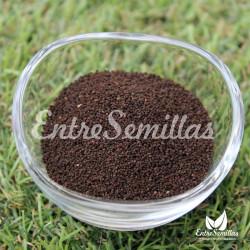 Conejitos semillas antirrhinum