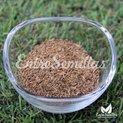 diente de leon semillas taraxacum officinale
