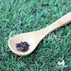 Ephedra sinica semillas