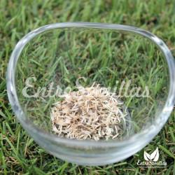 acmella oleracea semillas flor electrica