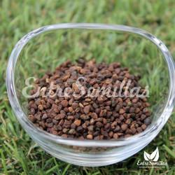 Jiaogulan semillas gumnostemma pentaphyllum