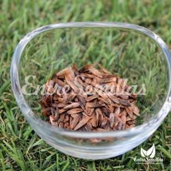 liquidambar styraciflua semillas liquidambar americano