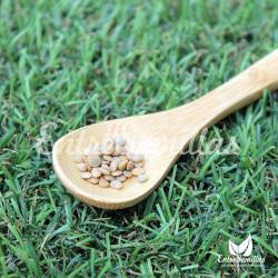 Mandrágora semillas