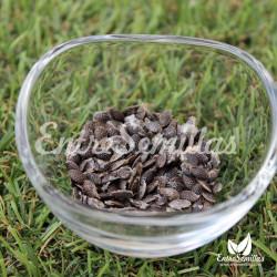 Maracuyá morada semillas passiflora edulis