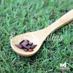 Membrillo japonés semillas para bonsai