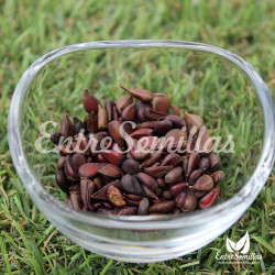 Membrillo japonés semillas