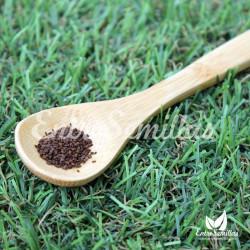 Menta coreana semillas agastache rugosa