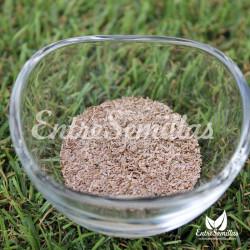Milenrama semillas achillea millefolium