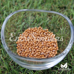 mostaza blanca semillas Sinapis alba