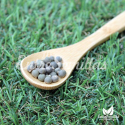Okra semillas Abelmoschus esculentus