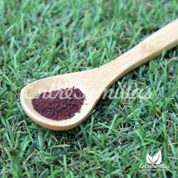 Orégano semillas Origanum vulgare