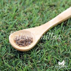 Perejil hoja lisa semillas petroselinum crispum