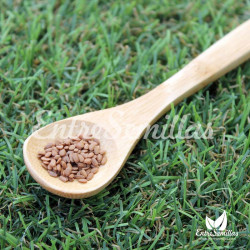 sambucus nigra semillas sauco negro