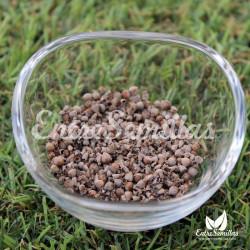 Sauzgatillo semillas Vitex agnus-castus