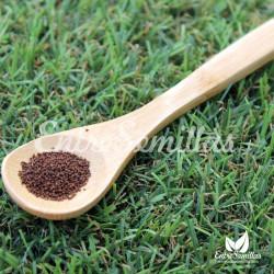 Tabaco Virginia semillas Nicotiana tabacum