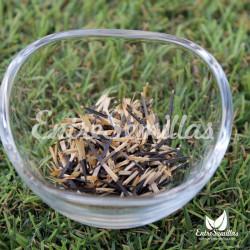 Tagetes, Clavel de India semillas Tagetes patula