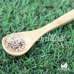 Tomate 'Black Krim' semillas
