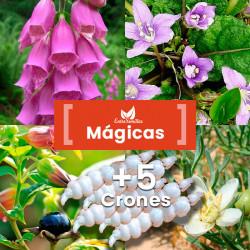 Pack Plantas Mágicas semillas