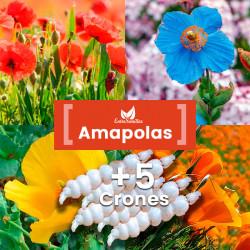 Pack de semillas de Amapolas