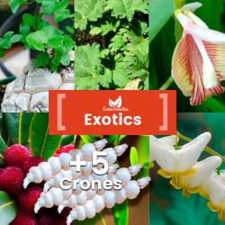 Pack de semillas Exotics
