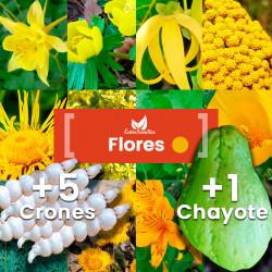 Pack de semillas de Flores amarillas