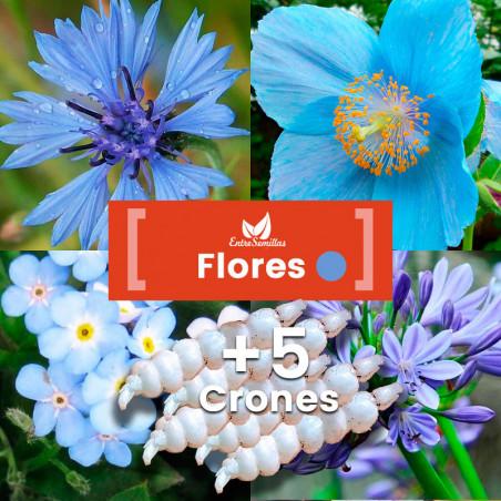 Pack de semillas de Flores Azules