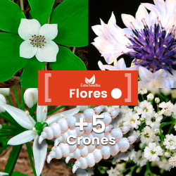 Pack de semillas de Flores Blancas