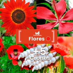 Pack de semillas de Flores Rojas