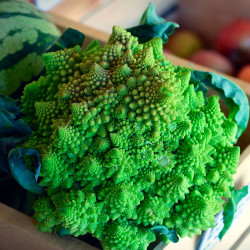 Romanesco semillas