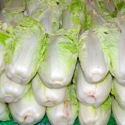 semillas del repollo de china verduras asiaticas