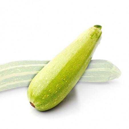 calabacin claro genoves semillas