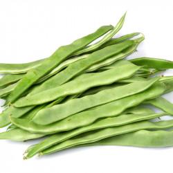 judias verdes semillas