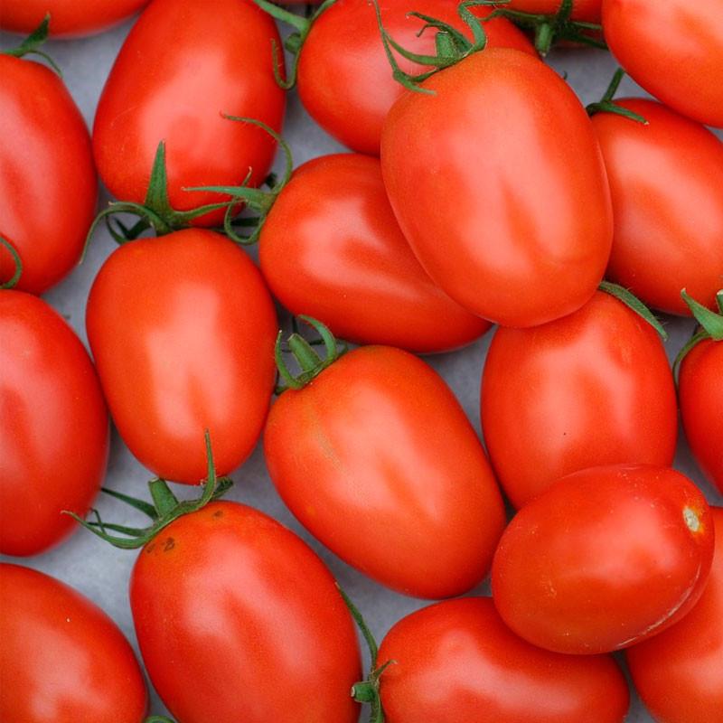 tomate roma semillas